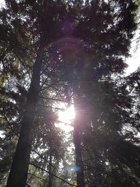 Spirituele Transformatiedag Sattva | Cosmic Light Energy